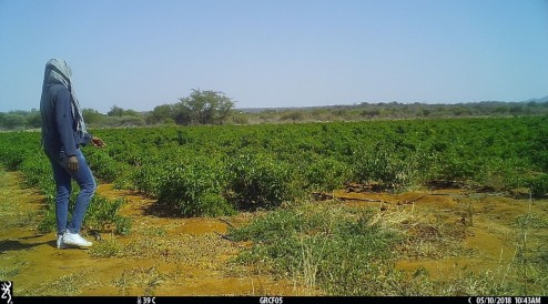 image from camera trap